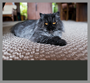 pet-dander-removal-carpet-upholstery-cleaners